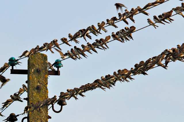 Почему птиц не бьет током на проводах - объясняем просто и понятно