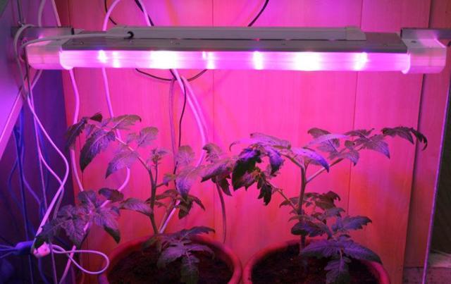 Подойдут ли лампы, используемые в аквариумах, для выращивания рассады?