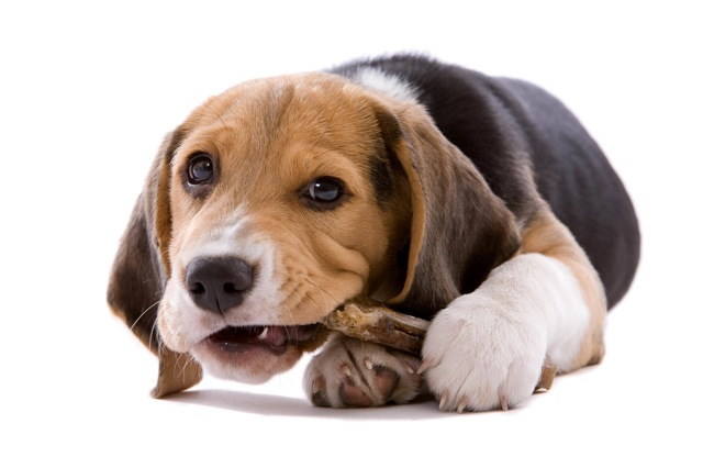 Защита проводов от кошек, собак, грызунов и других домашних животных