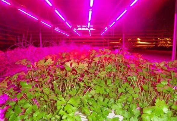 Светодиодная лента для растений: нюансы подключения и использования